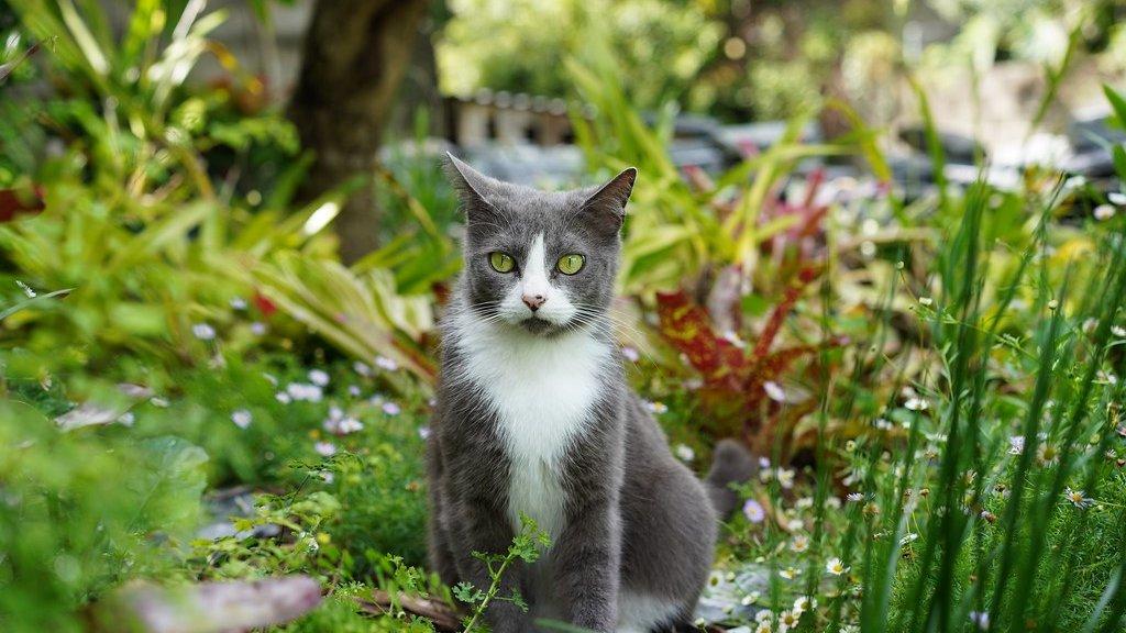 Een poes in de tuin.