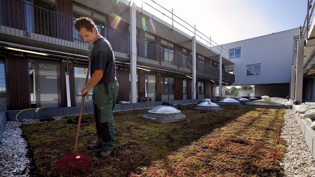 Een werknemer plaatst sedummatten op het dak.