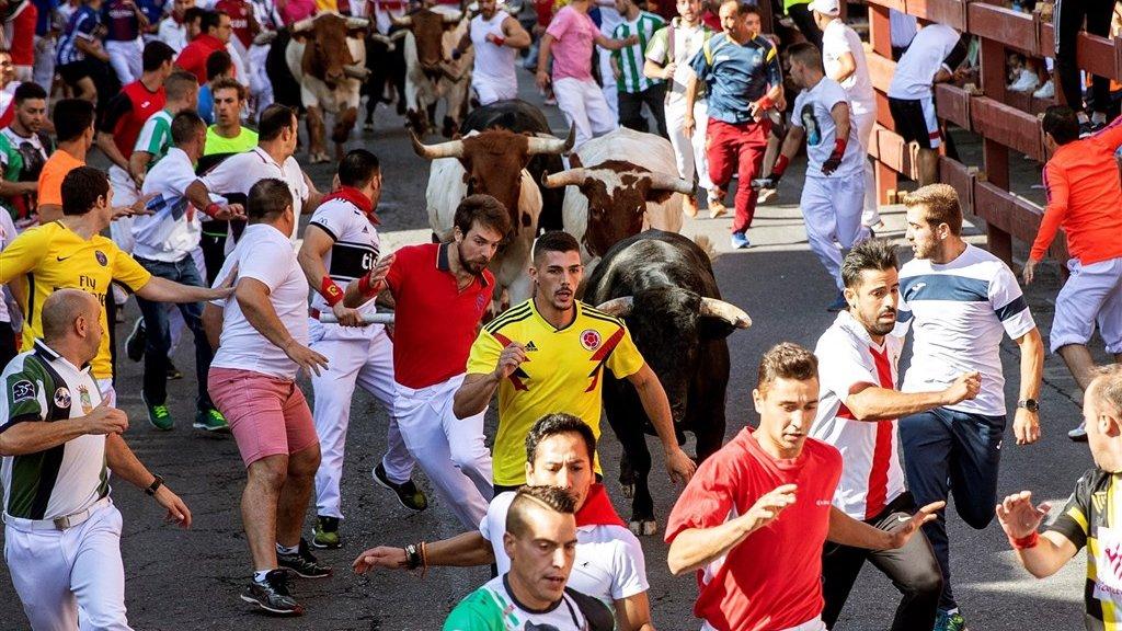 Stieren rennen door de straten van het Spaanse Cuellar.