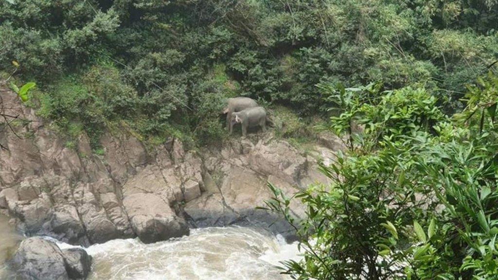 Twee olifanten die het ongeluk hebben overleefd