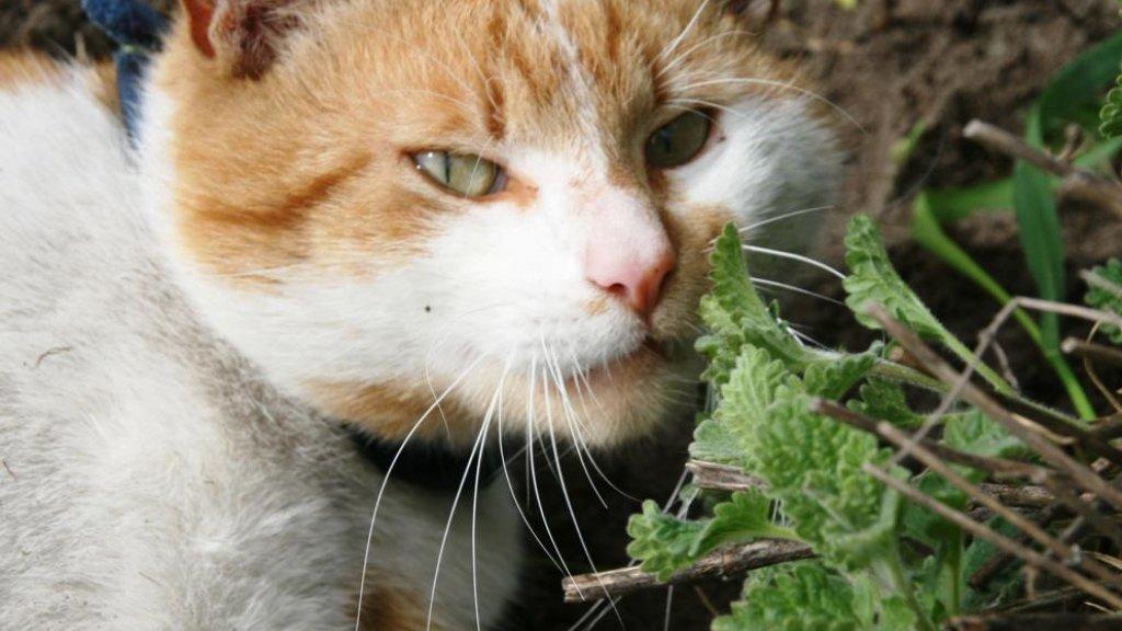 Een van zijn katten.