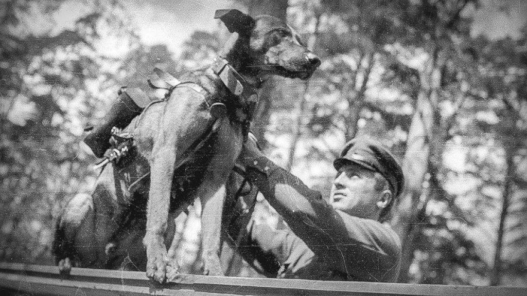 Russische hond met kilo's explosieven tijdens de Tweede Wereldoorlog.