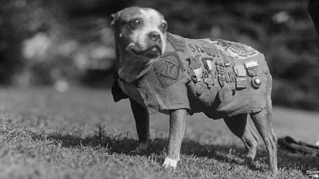 Sergeant Stubby, de meest gedocereerde hond in de Eerste Wereldoorlog.