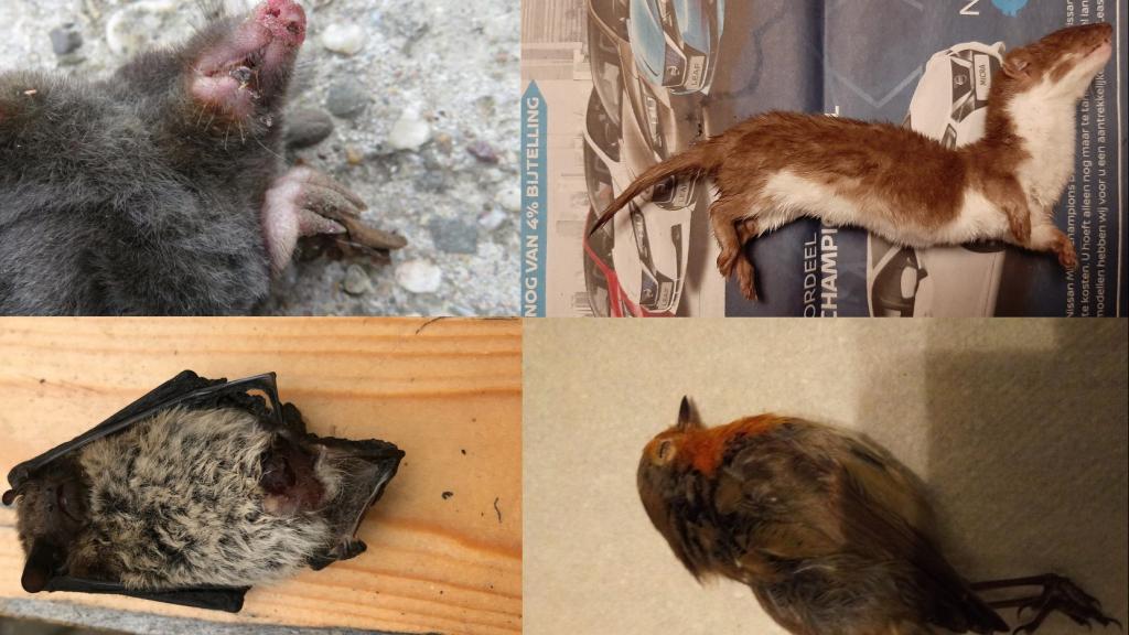 Slachtoffers van katten.