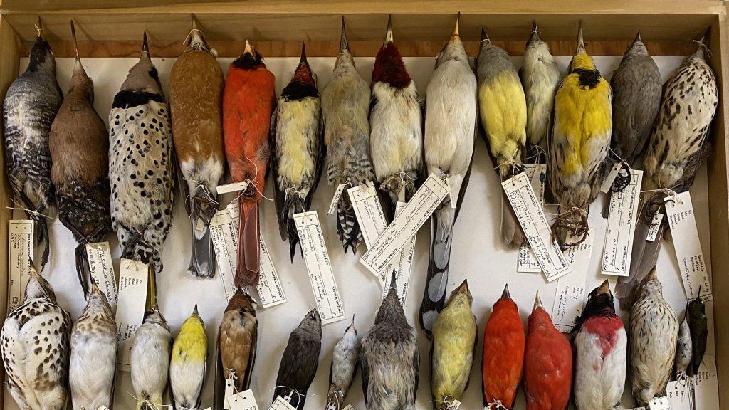 In totaal werden er 70.716 vogels verzameld.