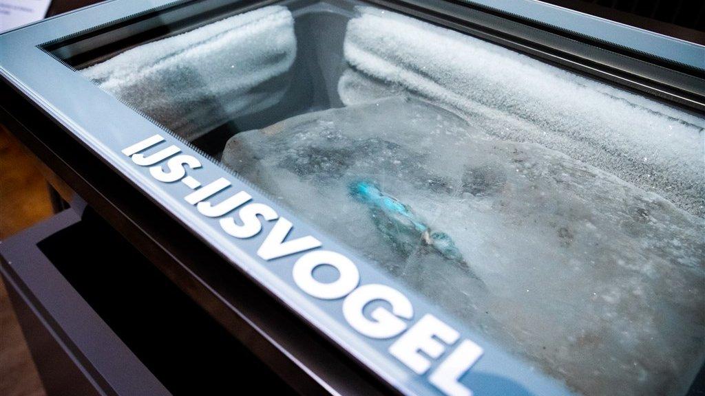 De ijsvogel in het ijsblok was een jaar lang te zien in het museum.