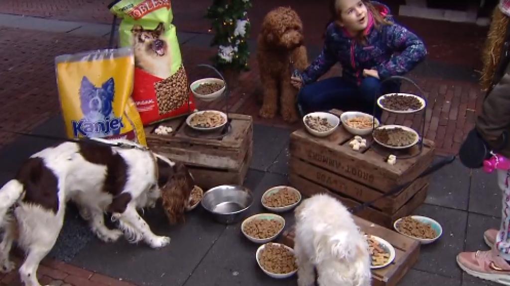 Op Landgoed de Scheleberg staat een speciaal buffet voor de honden klaar.