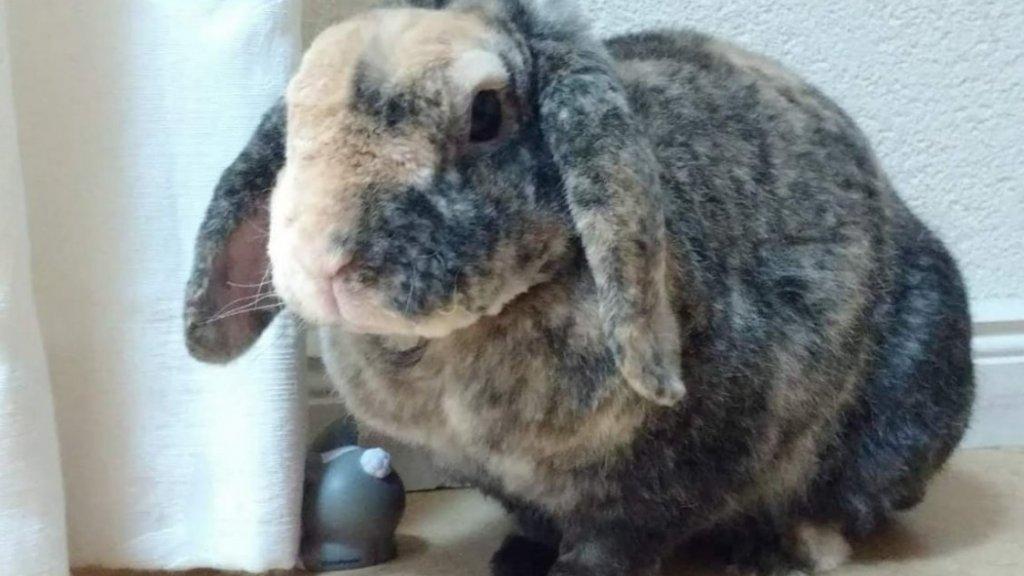 Timmy, een van de twee konijnen van Kim.