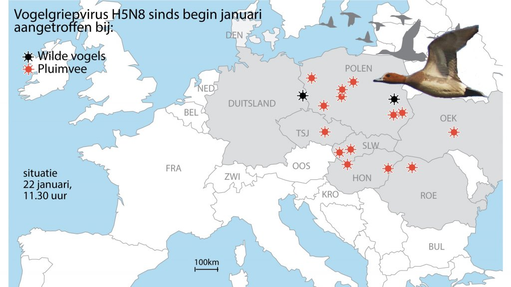 Het vogelgriepvirus heerst in verschillende landen, vooral in Polen.