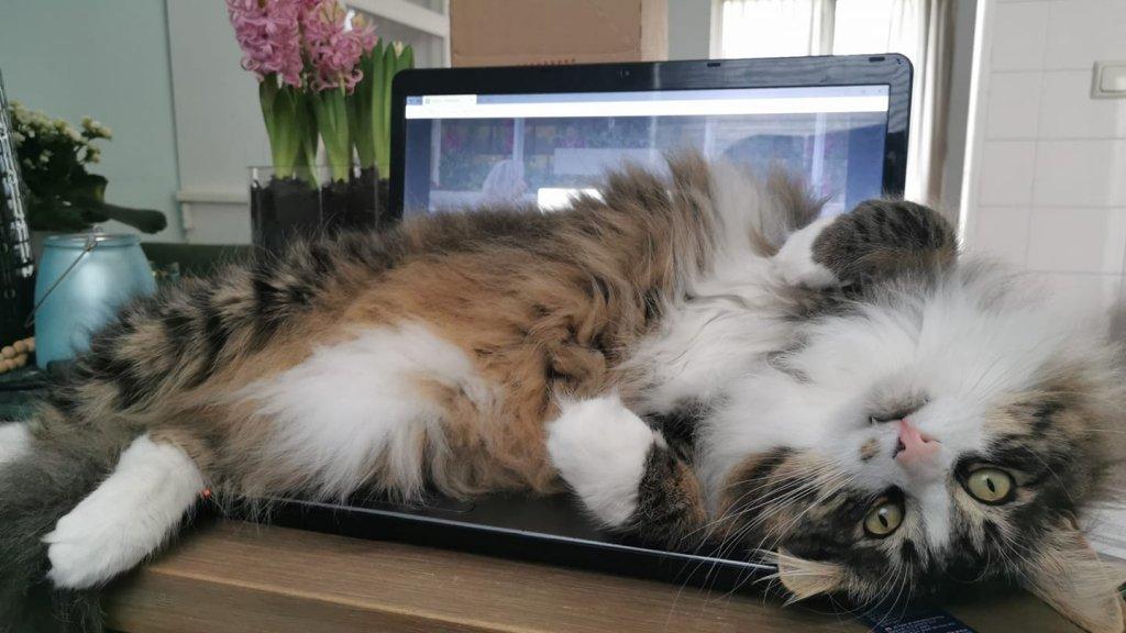 Ook kat Frankie wil graag aandacht