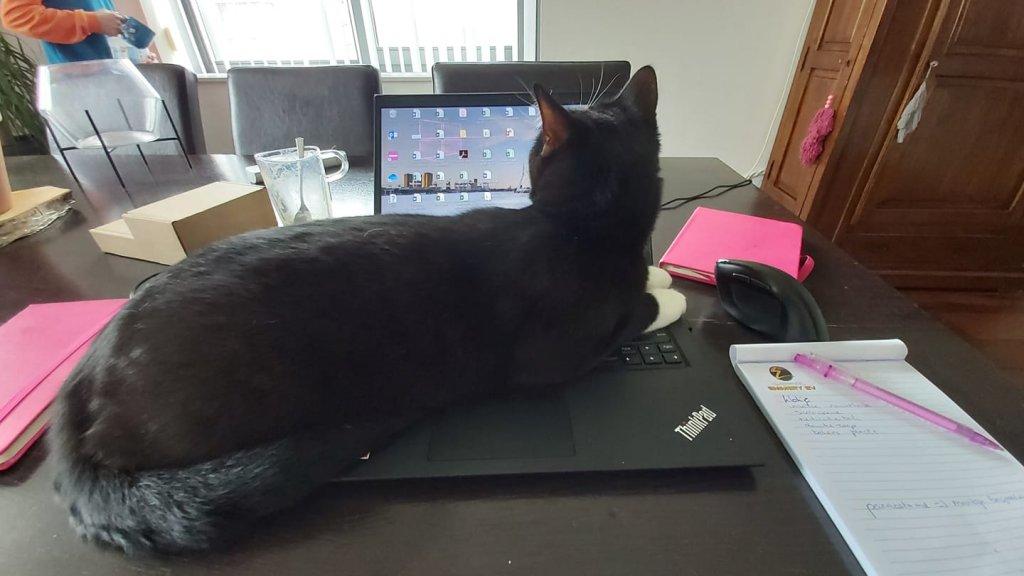 De kat van Sonja belde per ongeluk haar collega's