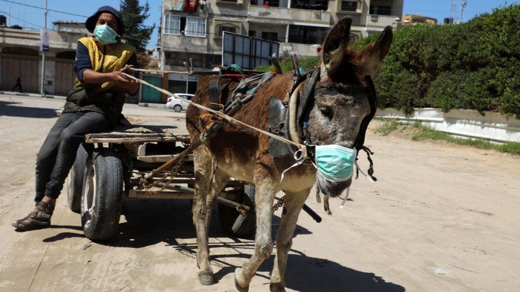 In de Gazastrook proberen mens en dier zich te beschermen.