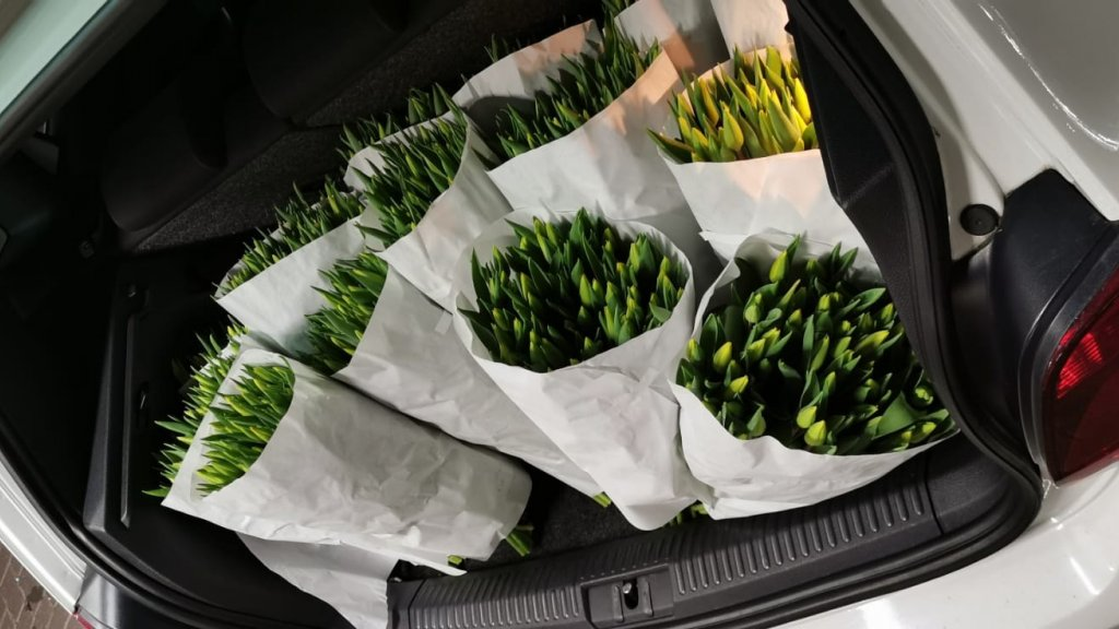 Tulpen in de achterbak.