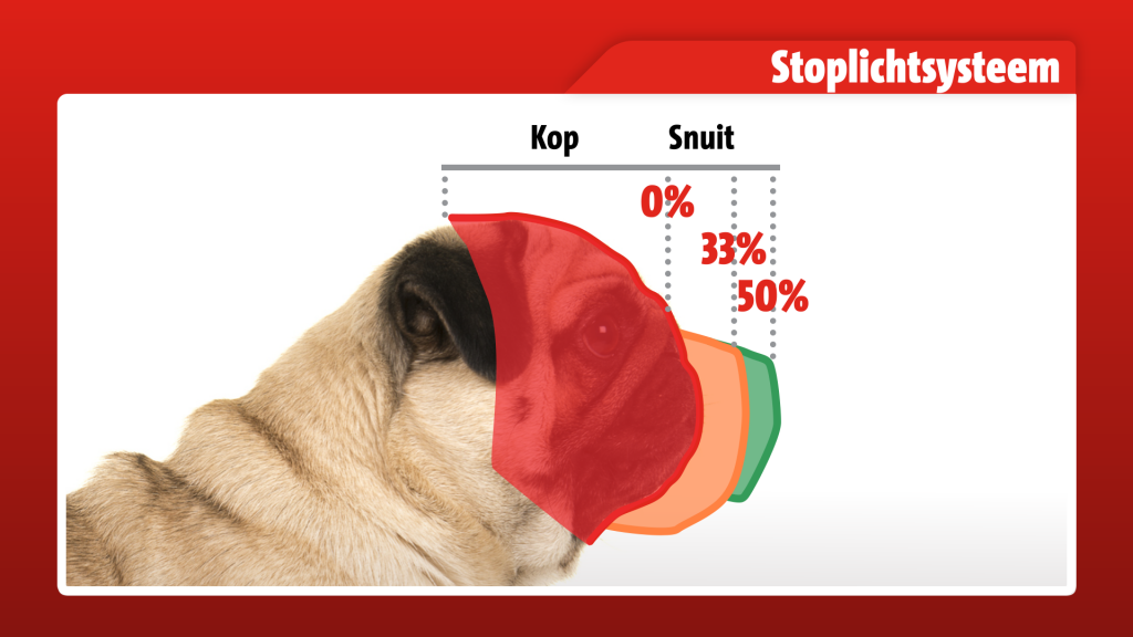 Door de korte snuit, kunnen de honden moeilijk ademhalen, zeggen dierenartsen.