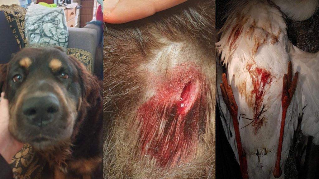 In Purmerend stak een voorbijganger een hond met een zakmes en in De Lutte werd een ooievaar doodgeschoten.