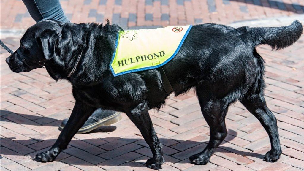 Een hulphond begeleidt iemand in Utrecht. (Archieffoto.)