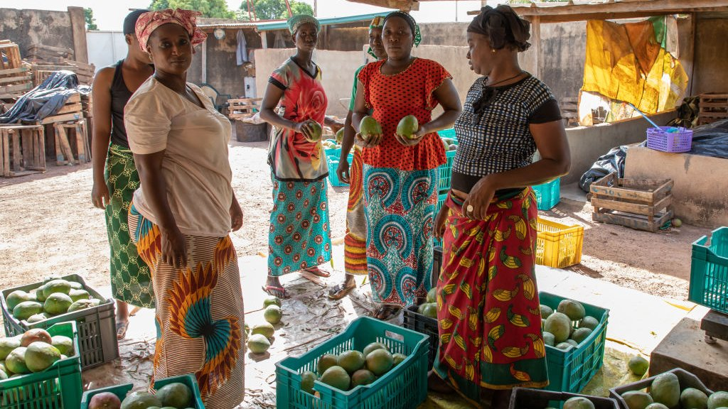 Coöperatie voor het verbouwen en verkopen van mango's in Ivoorkust.