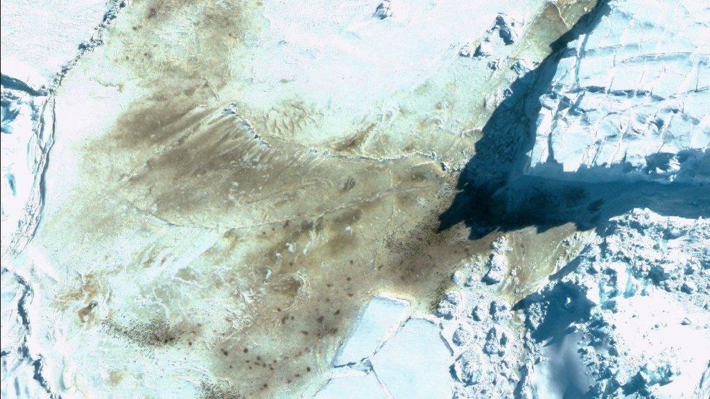 Satellietbeelden van de uitwerpselen op het ijs.