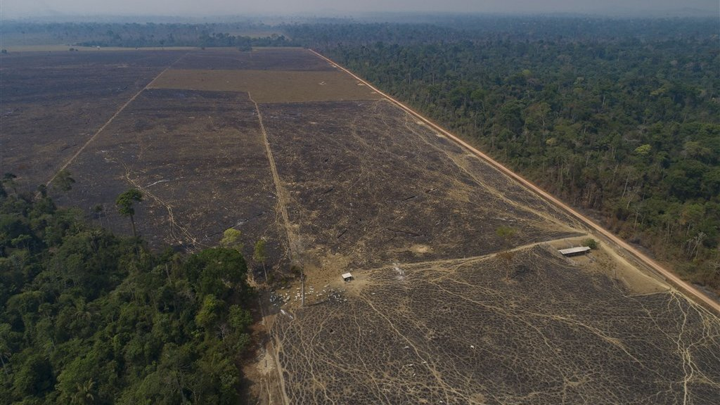 In ontbost Amazonegebied rond Novo Progresso kan nu vee grazen.