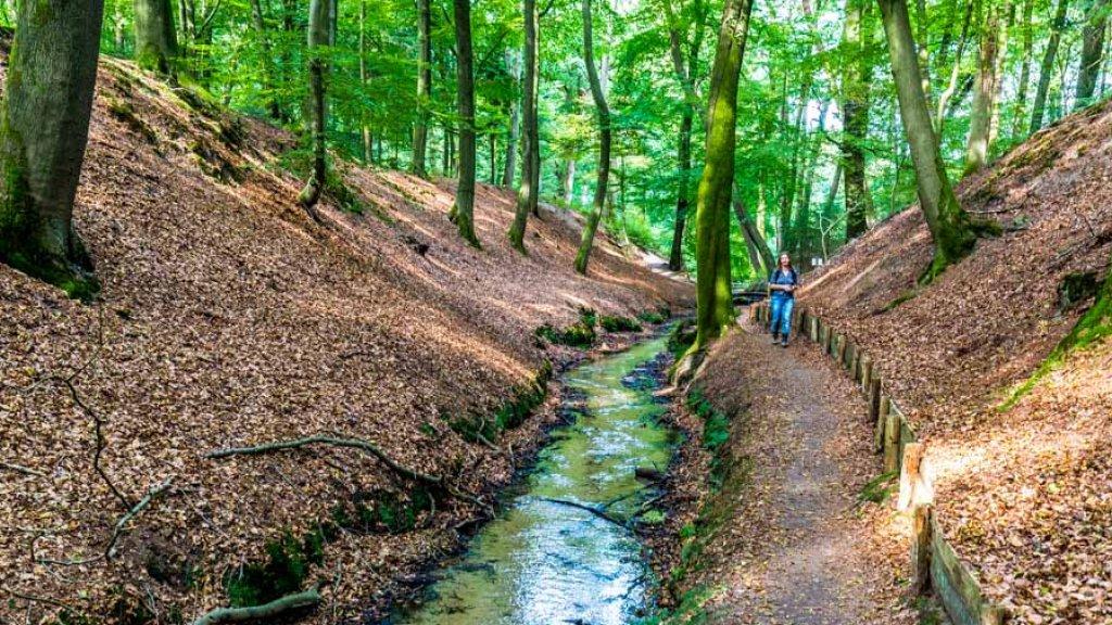 NS-wandeling door Nationaal Park Veluwezoom.