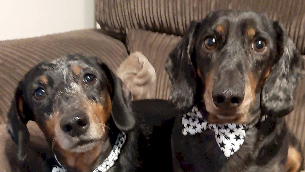 De honden Macho en Diesel van eigenaar Fennie.