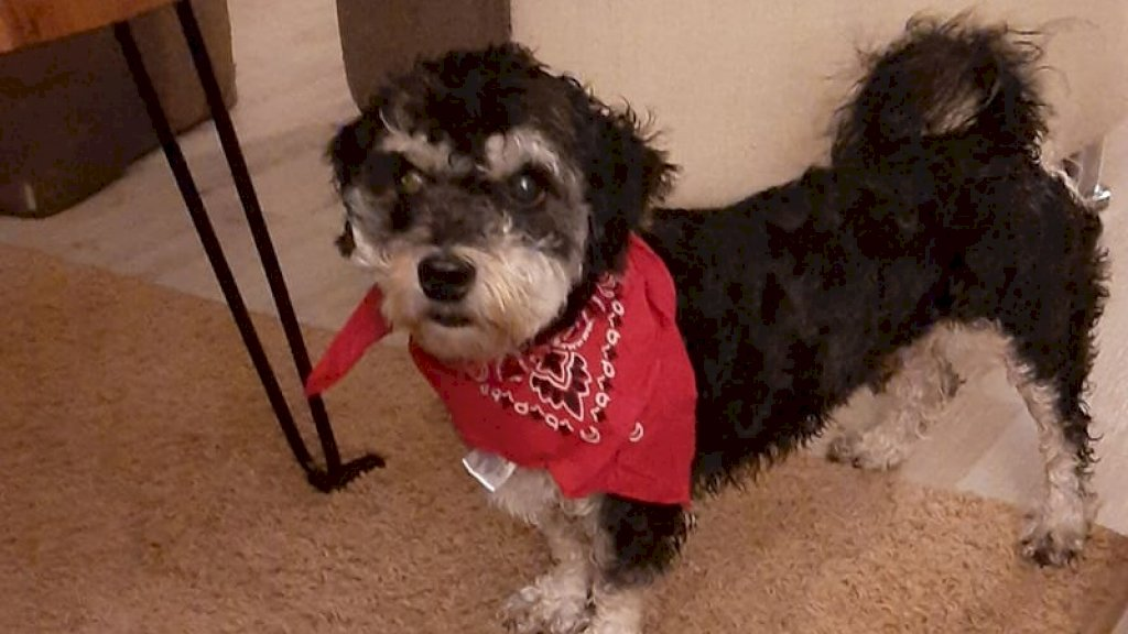 Deze hond van Juanita draagt de naam 'Oreo'.