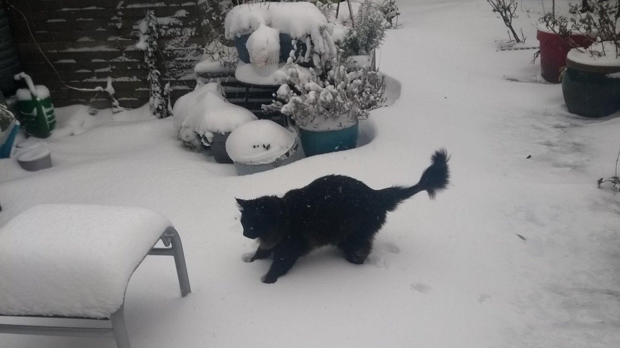 Spelen in de sneeuw werd Kwibus (3) fataal: 'Hij heeft er tien minuten van genoten' - RTL Nieuws