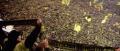 We are black & yellow, we are Borussia Dortmund
