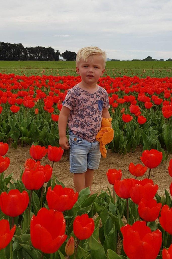 Dray tussen de tulpen.