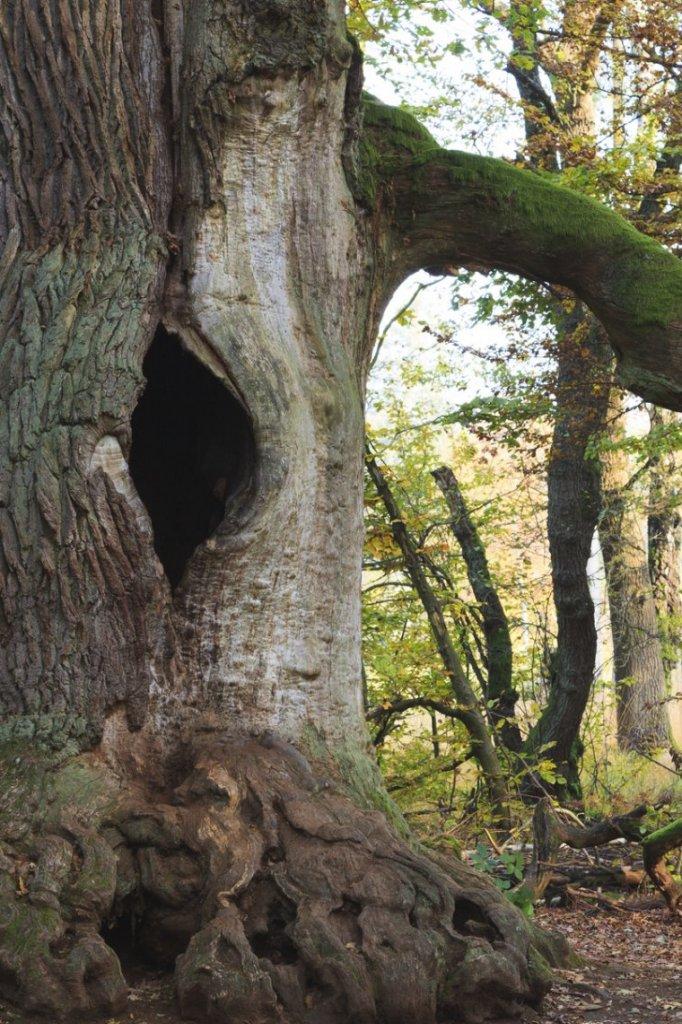 Het zogenoemde 'tree hole'.