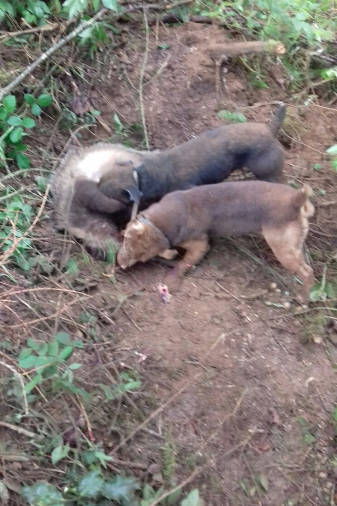 Een screenshot uit het filmpje die de dierenwelzijnsorganisatie online heeft gezet.