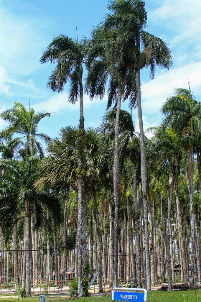 De palmentuin in Paramaribo.