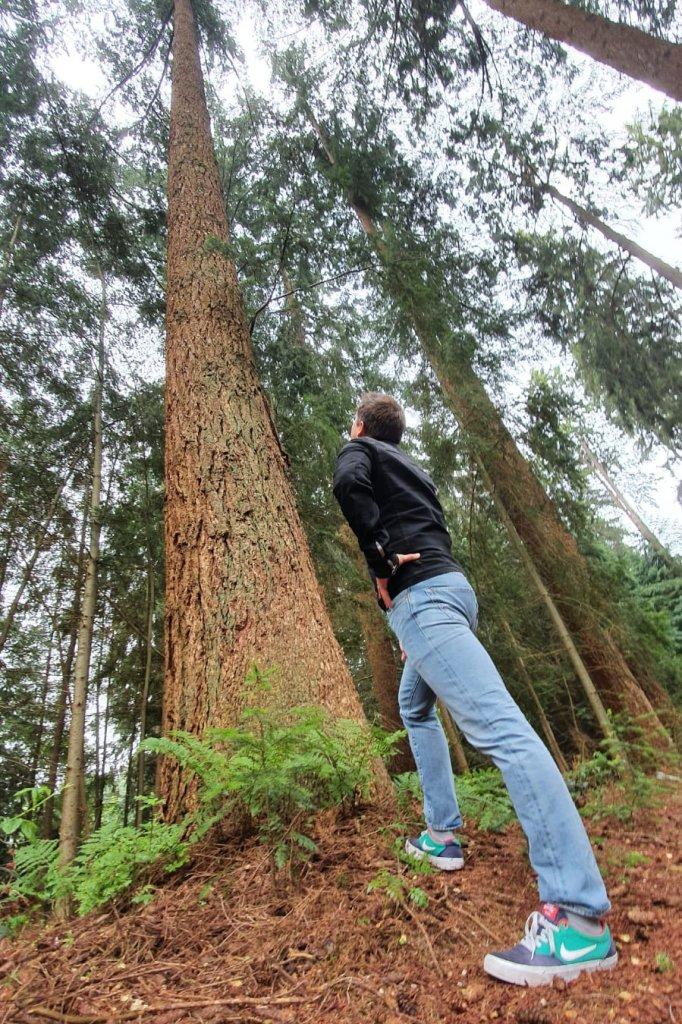Verslaggever Steef van Stiphout bij de hoogste boom van Nederland (ruim 50 meter) in Apeldoorn.