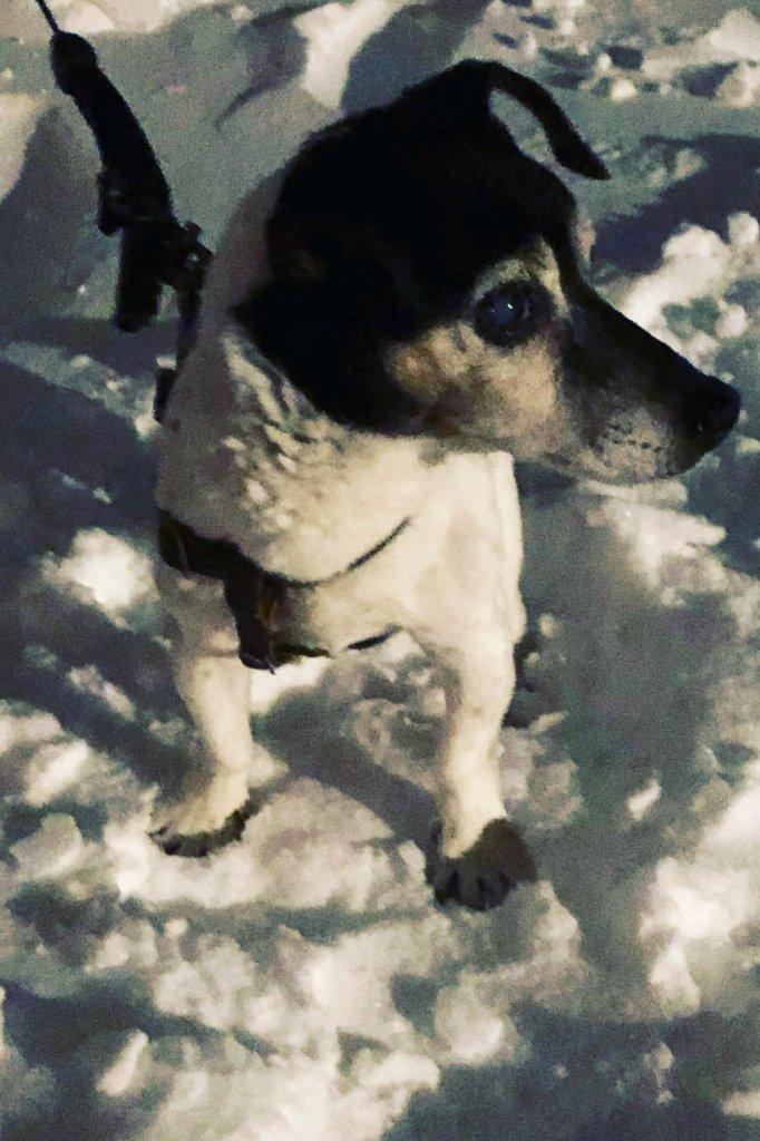 Teddy begin dit jaar in de sneeuw.